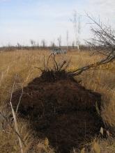 Рямовое болото 2006.09.30_16