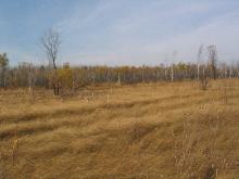 Рямовое болото 2006.09.30_12