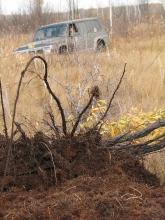 Рямовое болото 2006.09.30_17